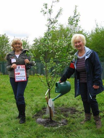 Tree Planting 2
